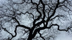 contrast_tree_depth_perception-1024x576