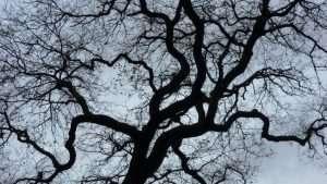 contrast_tree_depth_perception-1024x576